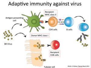 LVRiella Kidney Transplant iBook_virus response